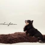 chihuahua_karin_foto_com