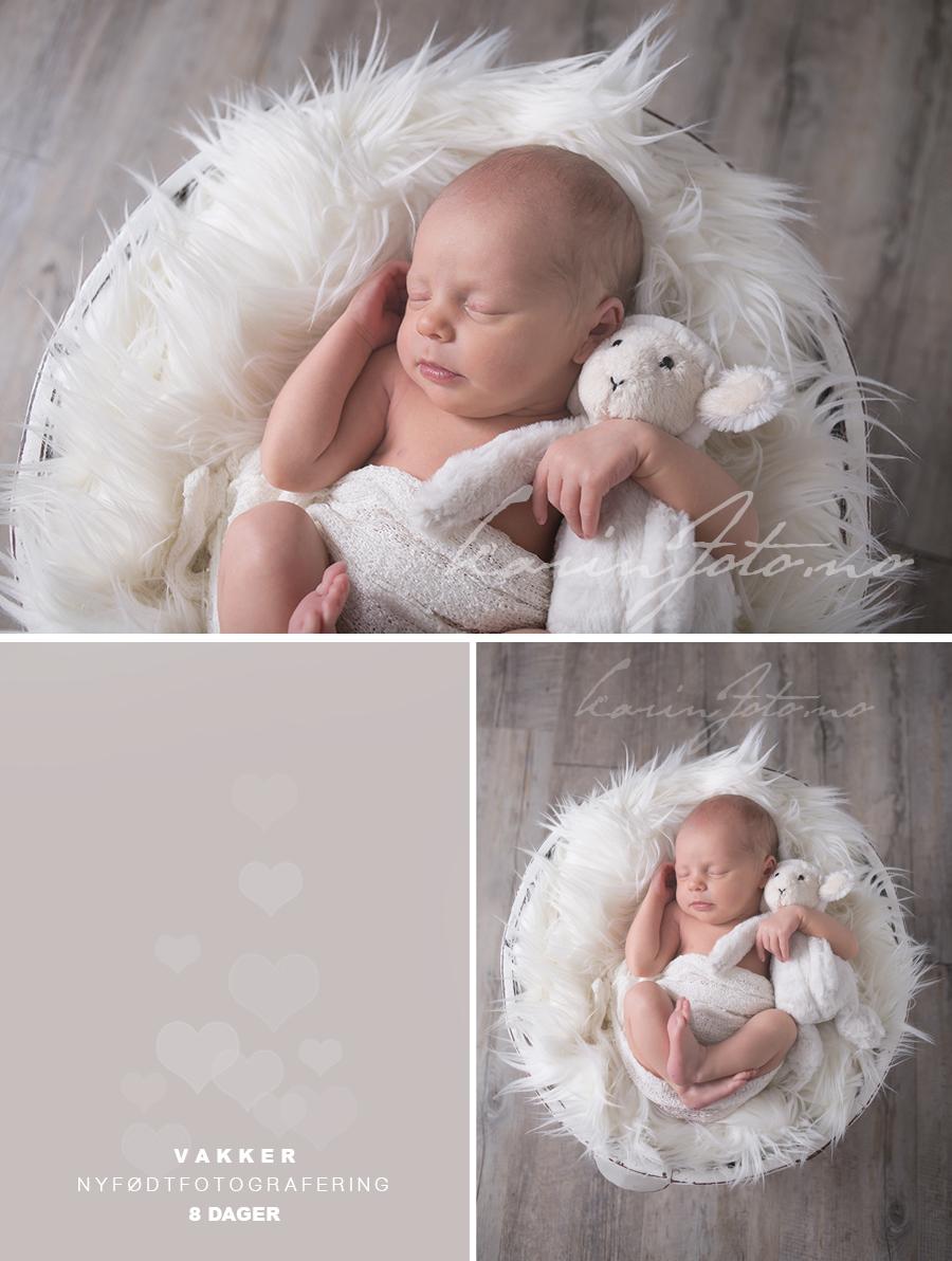 babyfotograf,karinfoto.no,nyfødtfotograf,nyfødt,8,dager,bamse,babystudio,
