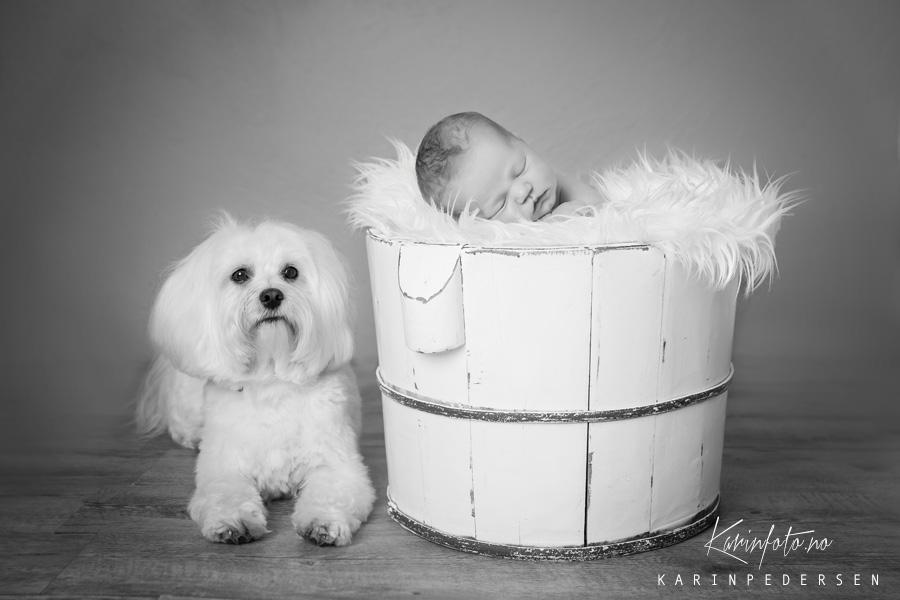 Nyfødtfotografering,nyfødt,karinfoto,hund,bøtte,sarpsborg,østfold