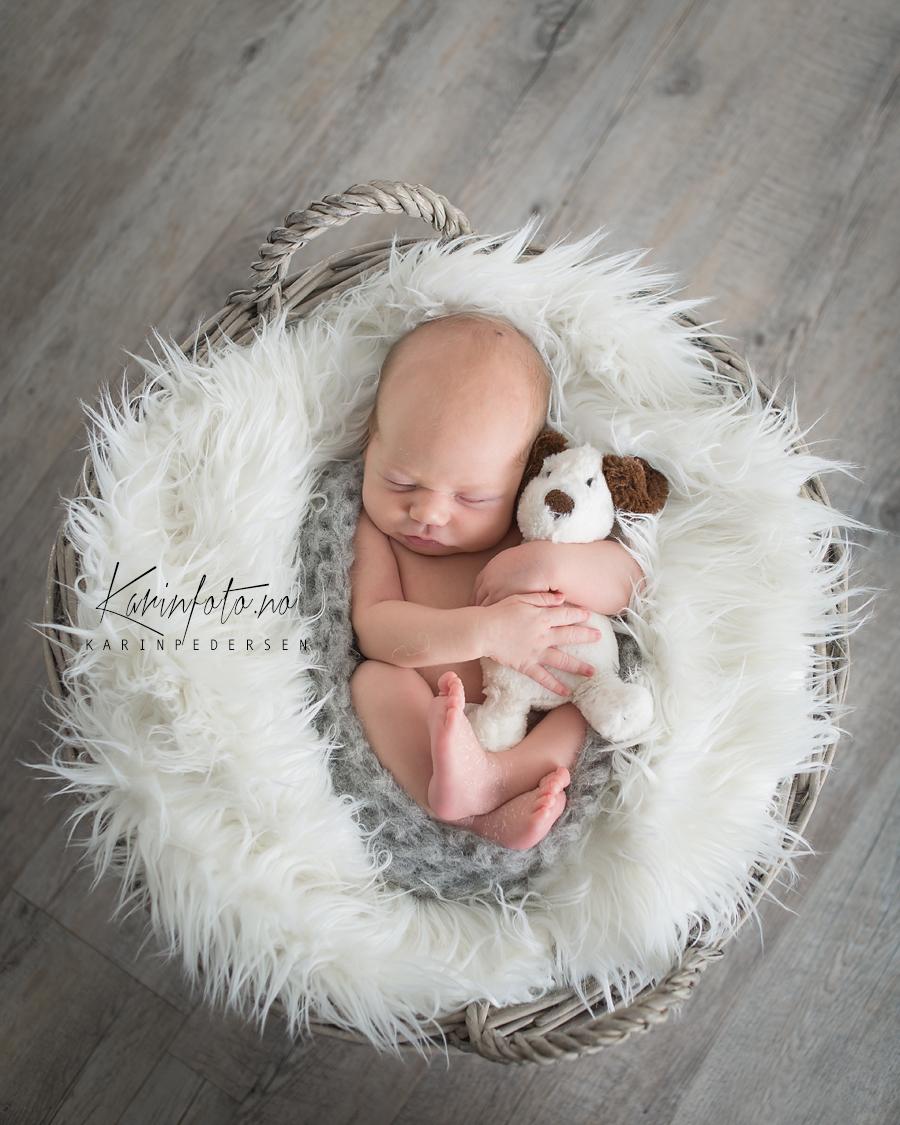vakker,nyfødtfotografering,koser bamsen,nyfødtfoto,nyfødt fra oslo,karinfoto,studio,østfold,sarpsborg