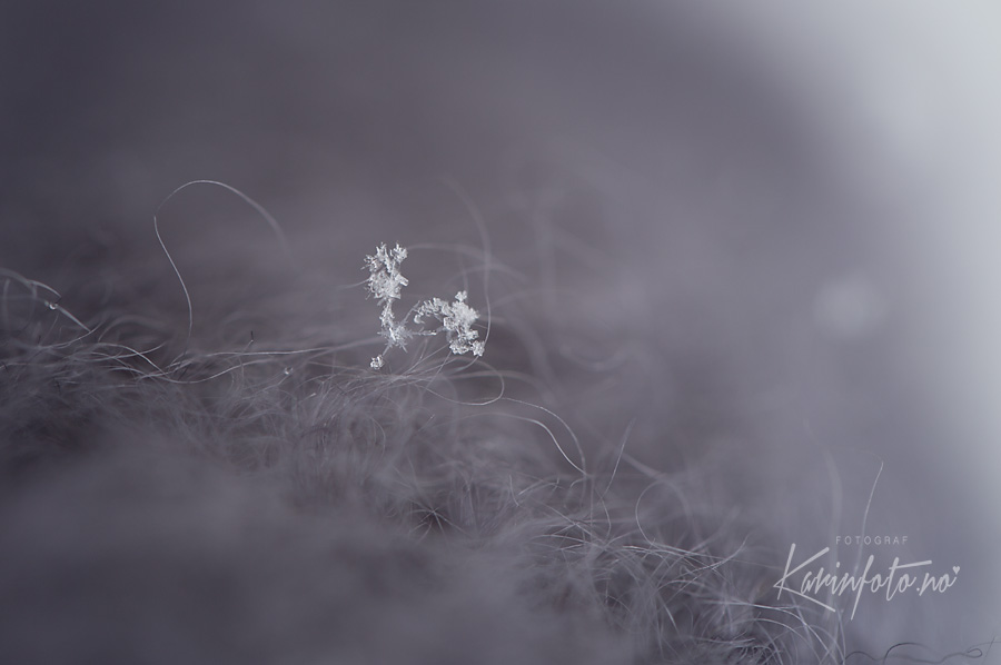 snøflak,snøkrystall,karinFoto,karin Pedersen,Fotograf,babyfotograf,snowflakes
