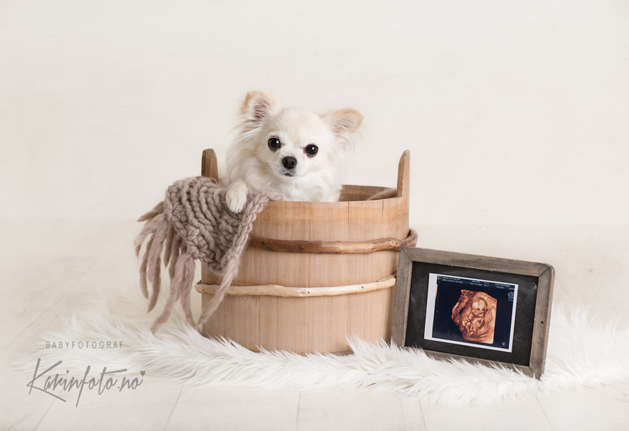 Gravid, Sarpsborg,baby på vei,Nyfødtfotograf,KarinFoto,ultralydbilde