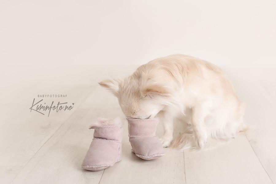 Storesøster to be fotografering,Chihuahua Milano,nyfødtfotograf Karin Pedersen,sarpsborg,østfold,