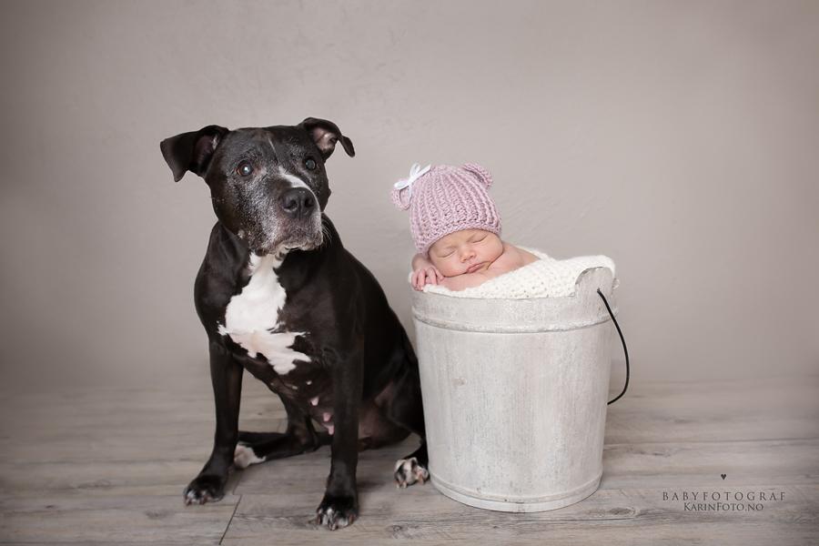Nyfødtfotograf,karinfoto,digitalefiler,babyfoto,nyfødtfoto,hundefotografering,nyfødt,nyfødtfoto,barsel,fødsel