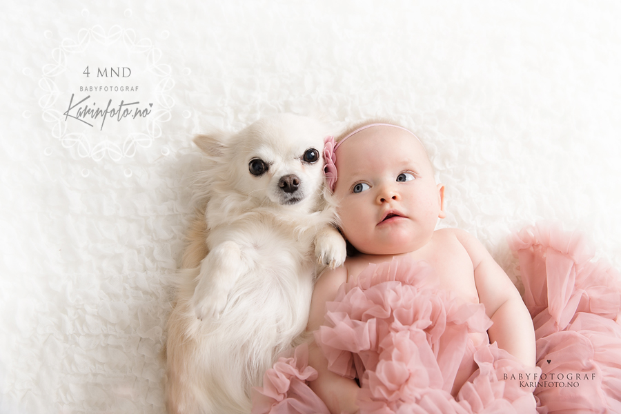 Babyfotografering,4mnd,babyfoto,babyfotograf,karinpedersen,fotograf,fotografering,babystudio,digitale filer,fotograf Karin Pedersen, KarinFoto,chihuahua,hund,venner