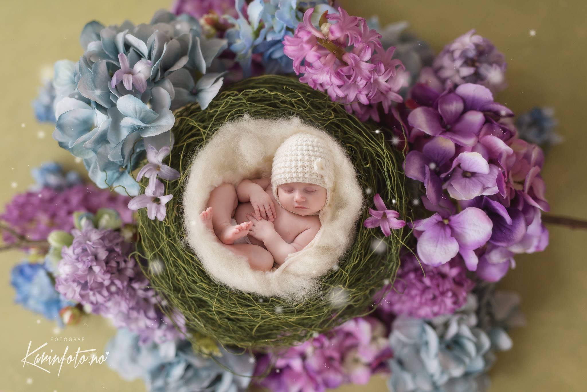 Kunst,nyfødtfotografering,fineart,babyfotograf,nyfødtfotograf,babyfoto,fotograf KarinPedersen,blomster,fargerik,kunstbilde