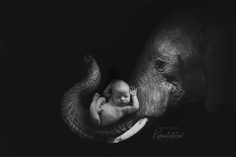 Fotograf,KarinPedersen,fotograf,nyfødtfotograf,fineart,babyfoto,kunst,Digitalart,babyfoto,sarspborg,fredrikstad,moss,halden,oslo,akershus,strömstad